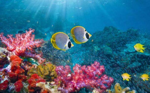 ساخت زیستگاه های مصنوعی در آب های مرجانی کیش