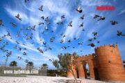 سایت پرندگان جزیره کیش