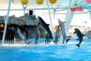 پارک دلفین کیش و باغ پرندگان